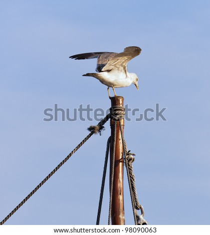 Seagull sits at the top of the mast - Porto, Portugal