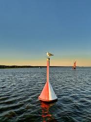 Seagull sitting on a navigation marker buoy in Vistula Lagoon at sunset.