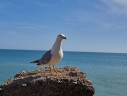 Seagull sitting on a rock near the ocean