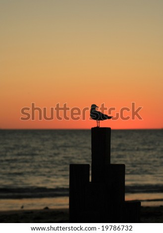 Seagull sitting on a timber bar in dusk
