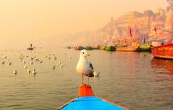 Seagull sitting on the boat in the morning boat ride on ghats of river ganges