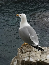 Seagull standing near the sea