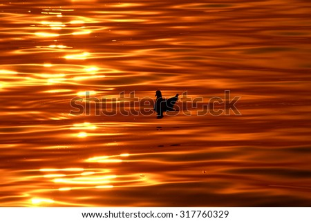 Seagull sunset background, on the sea #317760329