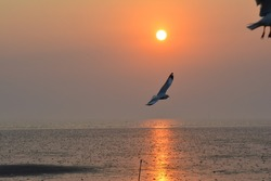 seagull the sea and thesun