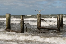 Seagull with widespread wings on a wooden pile of an traditional wood slip system (slipway) in the rough sea on a windy day; Zingst, Baltic Sea, Germany, Europe