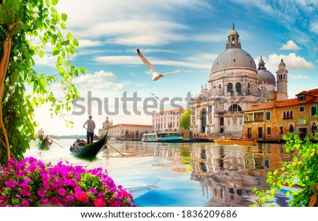 Seagulls and old cathedral of Santa Maria della Salute in Venice, Italy Foto stock ©