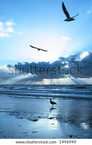 Seagulls and sunset on the beach