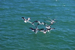 Seagulls and very common birds in Florida region and usually eats fish but can eat anything.