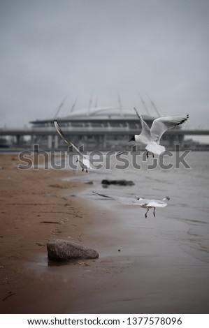 seagulls and zenit arena  #1377578096