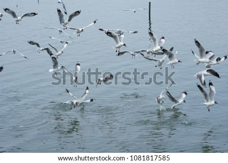 Seagulls are hunting fish in the sea #1081817585