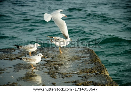 seagulls are standing and flying in front of the sea on the pier. Seagull portraits against sea shore. Close up view of white bird seagull sitting by the beach. Wild seagull with natural water
