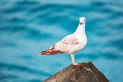 Seagulls are very intelligent birds, who live in colonies of few pairs or couple of thousands of birds. Seagulls will sleep in any wide-open spot, but prefer on a calm body of water.