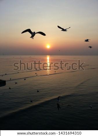 Seagulls at Bangpu Recreation Center, Samutprakarn, Thailand. #1431694310