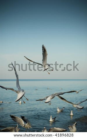 Seagulls at the Baltic sea.