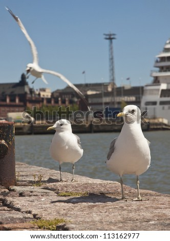 Seagulls at the harbor