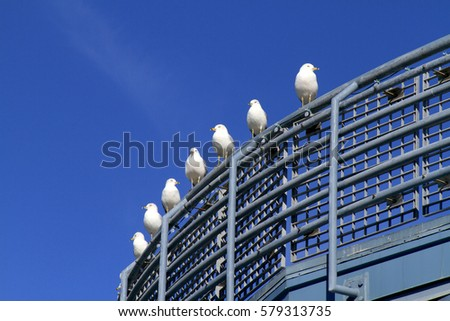 seagulls at watch