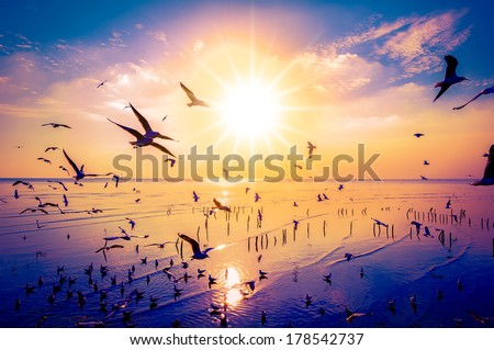 Seagulls Beautiful sunset sky birds flying in Thailand background happiness calm nature clound #178542737