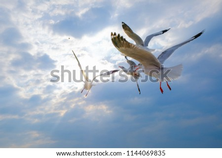 Seagulls bird are flying to the blue sky #1144069835