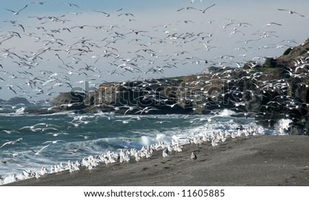 seagulls everywhere on the...