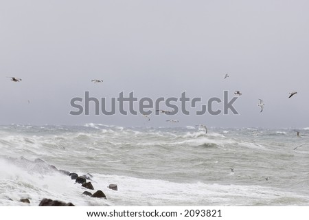 Seagulls fighting in the storm winds over the Baltic sea