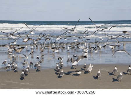 Seagulls flock at the Atlantic Ocean shoreline in Daytona Beach, Florida