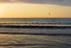 Seagulls flock in the sea at sunrise, fish farm at the horizon