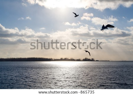 Seagulls fly over Lake Ontario, the sun glinting off the water through the clouds.