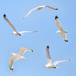 Seagulls flying among blue sky