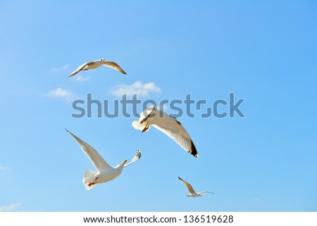 seagulls flying and fighting on blue sky