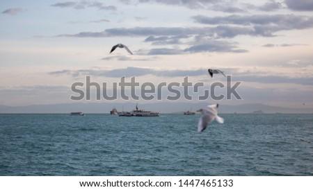 seagulls flying around the passenger ferry Stok fotoğraf ©