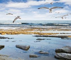 Seagulls flying at sea rocky beach  - Greece, Thassos, Limenaria.