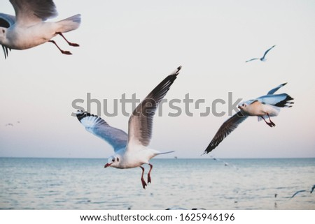 seagulls flying at  the bangpoo and twilight sky