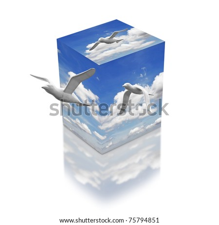 Seagulls flying from a 3D box of cloudy fresh blue sky with reflection.