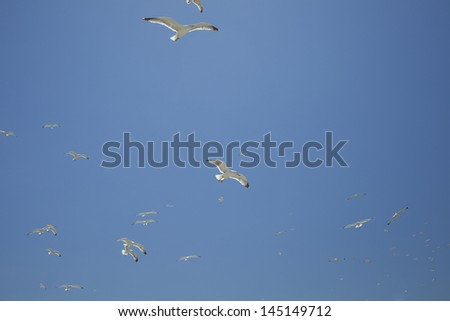 Seagulls flying in a blue sky