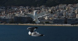 seagulls flying in front of a cityline