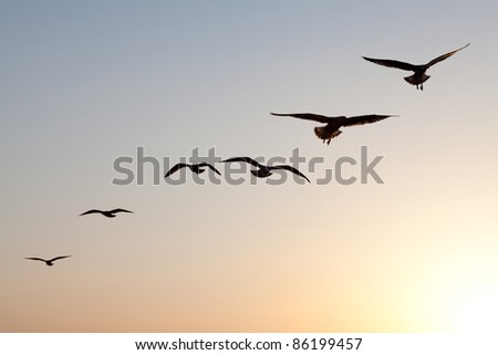 seagulls flying in sunset