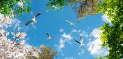 seagulls flying in the sky between white and green trees