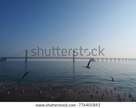 Seagulls flying near the sea with a bridge in the background. #776401843