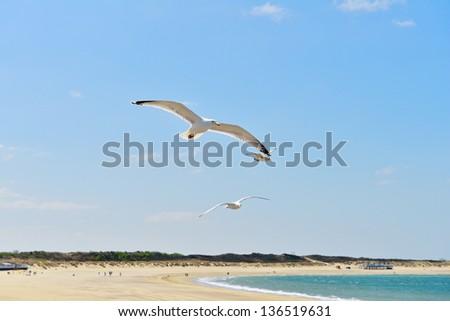 seagulls flying on coastline