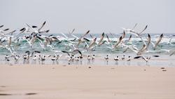 Seagulls flying on the coastline