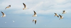 seagulls flying over the sea in bad weather