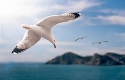 Seagulls flying over the sea in the summer
