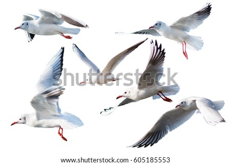 Seagulls flying style, isolated on white background,clipping path.