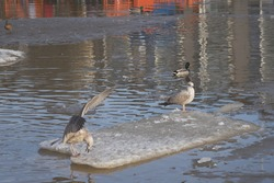Seagulls in a pool of water