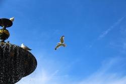 seagulls in flight around fountain