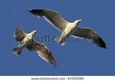 Seagulls in flight isolated on a blue sky