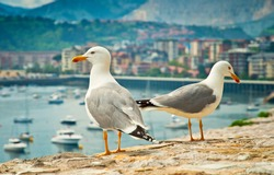 Seagulls in the city