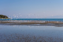 Seagulls in the sea in the Urla district of Izmir.