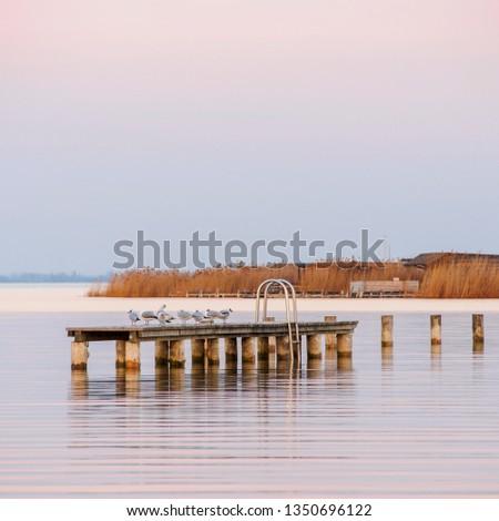 seagulls on a jetty #1350696122
