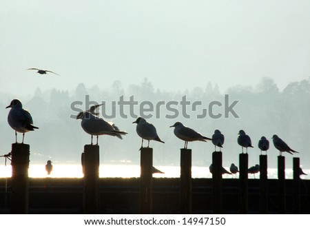 Seagulls on a line of poles in a ?harbor
